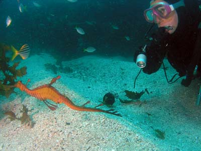Blind Shark Reef Sea Dragon
