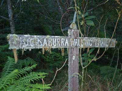 Kookaburra Sign