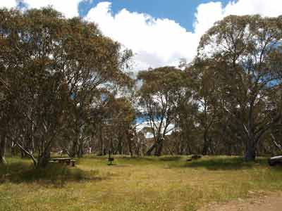Bryces Gorge Camping Area