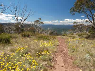 Dimmicks Lookout